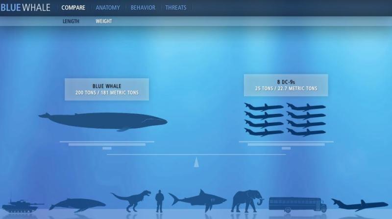 ballena-azul (1)
