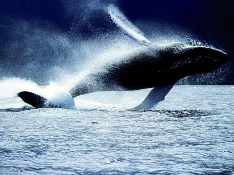 salto-da-baleia-b34d2